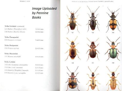 The Carabidae (ground Beetles) of Britain and Ireland