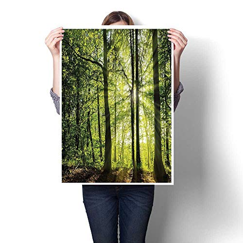 Canvas Print Wall Art,Decor Collection Sunny Forest in The Springtime with Sunbeams Rural Areas Jungle Nature Canvas,Artwork for Wall Decor,12