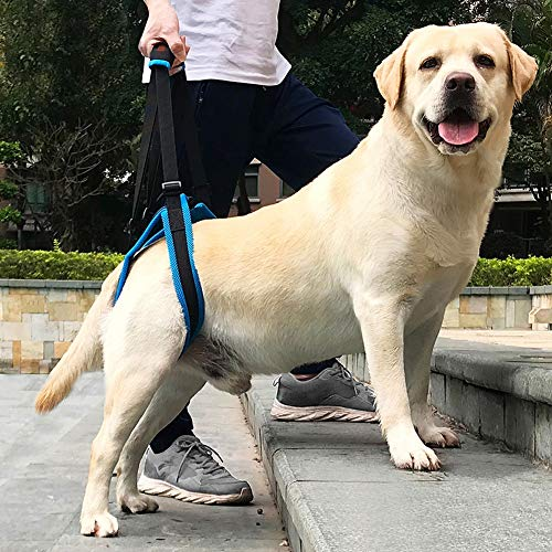ROZKITCH Pet Dog Support Harness Rear Lifting Harness Veterinarian Approved for Old K9 Helps with Poor Stability, Joint Injuries Elderly and Arthritis ACL Rehabilitation Rehab (S)