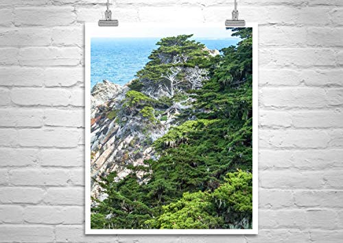 Monterey Cypress Tree Picture, Point Lobos Carmel by the Sea Photograph