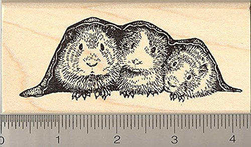 Guinea Pig Rubber Stamp, Three Pigs in a Blanket