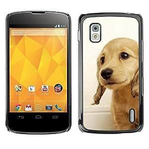 YiPhone /// Prima de resorte delgada de la cubierta del caso de Shell Armor - Golden Retriever Puppy British Dog Yellow - LG Google Nexus 4 E960