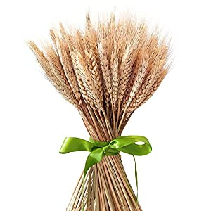 Pumpumly 100x Dry Grass Bouquet Decoration Wedding flower bouquet wedding High simulation-2 bunch,dry wheat,Wheat Bundle,stalk,Naturally Dried flowers for Home Party Decorations 101