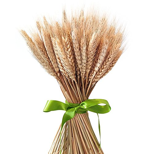 Pumpumly 100x Dry Grass Bouquet Decoration Wedding Craft Props High Simulation-2 bunch,Artificial Flower,Wheat Bundle,stalk,Naturally Dried flowers for Home Party Decorations - Dried Grass