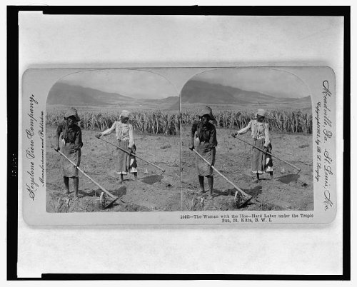 Infinite Photographs Photo: Photo of Stereograph, Hard Labor, Tropic Sun, Saint Kitts, BWI, British West Indies Size: 8