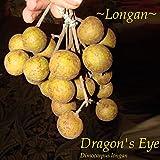 ~Dragon Eye~ LONGAN Dimocarpus Exotic Fruit Tree Live Potted plant