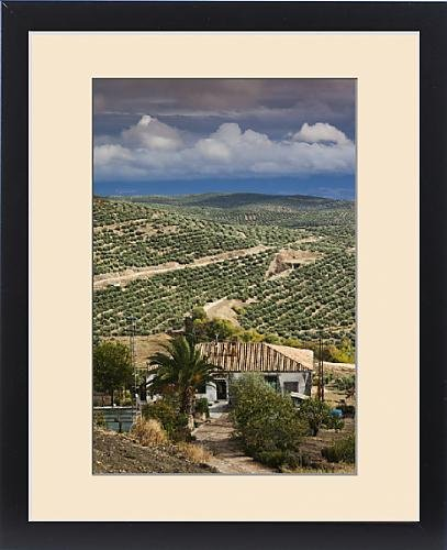 Framed Print of Spain, Andalucia Region, Jaen Province, Ubeda, elevated view of olive groves by Fine Art Storehouse