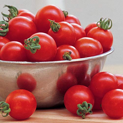 Burpee Super Sweet 100' Hybrid Cherry Tomato, 3 Live Plants, 2 1/2'' Pot by Burpee (Image #3)