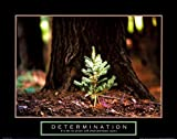 Determination Baby Pine Motivational Poster Little Tree Inspirational Print