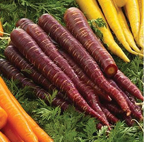 David's Garden Seeds Carrot Purple Elite SL (Purple) 500 Non-GMO, Hybrid Seeds