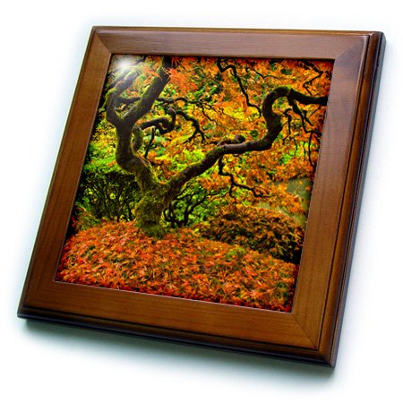 (3D Rose Maple-Portland Japanese Garden-Autumn-Oregon-USA Framed Tile, 8