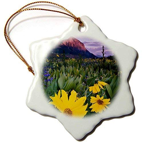 (Ornaments to Paint Danita Delimont - Plants - USA, Colorado, Mt. Crested Butte. Meadow wildflowers at sunset.)