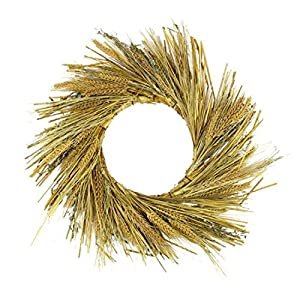 Northlight Unlit Autumn Harvest Wheat Grass and Grapevine Thanksgiving Fall Wreath, 22""