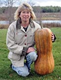 buy Naples Long Pumpkin 20 Seeds an Old Italian Heirloom & a Most Unusual Pumpkin now, new 2018-2017 bestseller, review and Photo, best price $7.98