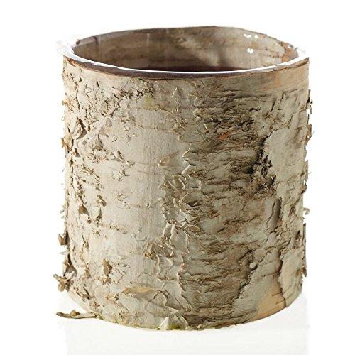 Birch Cylinder Vase Buy 4 -5.5