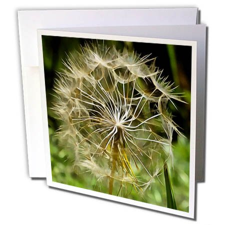 3dRose Taiche - Acrylic Painting - Salsify - Tragopogon Wildflower Salsify - 1 Greeting Card with envelope (gc_260780_5) ()