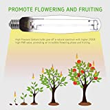 VIVOSUN Hydroponic 4-Pack 1000 Watt Flowering
