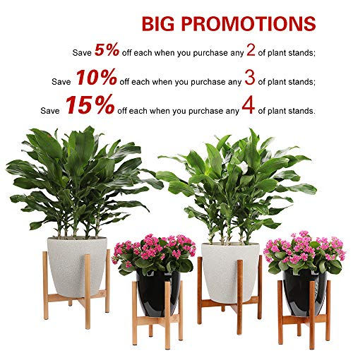 Buy flowering plants for delivery prime