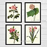 Botanical Print Set of 4 Antique Beautiful Redoute Flowers Pink Coral White Rose Snowball Periwinkle Gladiolus Garden Nature Plants Home Room Decor Wall Art Unframed