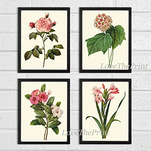 Botanical Print Set of 4 Antique Beautiful Redoute Flowers Pink Coral White Rose Snowball