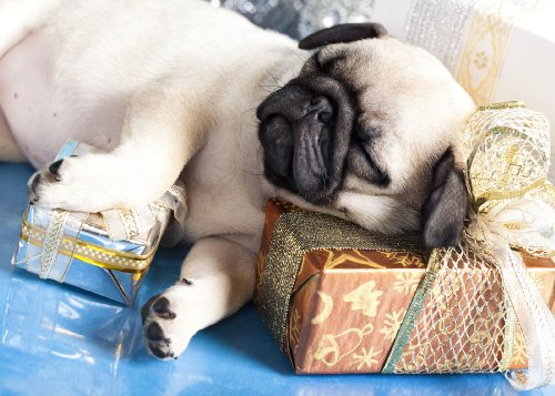 Sleeping Pug Puppy Holiday Cards (Cards Pug Christmas)