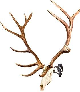 Amazon com : Highwild European Mount Skull Hanger, Antler Style (1