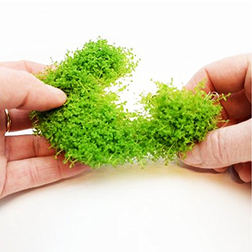 Image of Mainam (1-Cup) Dwarf Baby Tears Carpet Imported Direct from Grower Live Aquarium Plants Decoration Tissue Culture for Freshwater Aquatic Plant Tank