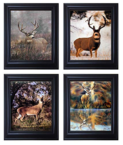 Whitetail Buck and Mule Deer Hunting Wild Animal Black Framed 8x10 Four Set Picture Wall Decor Art Print Posters