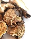 Spice Jungle Forest Mushroom Blend - 1 oz.