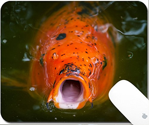 Luxlady Gaming Mousepad 9.25in X 7.25in IMAGE: 24103887 Large carp Japanese Koi begging to be fed