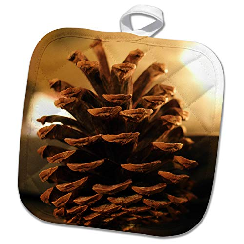 (3dRose Stamp City - Still Life - A Close up Still Life Photograph of a Single Pinecone. - 8x8 Potholder (PHL_302861_1))