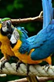Blue and Gold Macaw Parrots Pair on a Rope Journal: Take Notes, Write Down Memories in this 150 Page Lined Journal