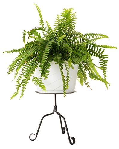 (Wrought Iron Plant Stand or Large Pillar Stand - Hand Made by Amish)