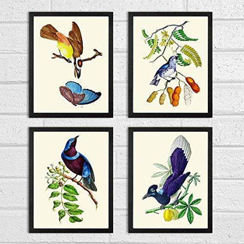 bird-print-set-of-4-art-prints-beautiful-colored-colorful-tropical-fruit-natural-science-summer-gard