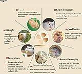 XINGFENSIFNE Hamster Exercise Wheel Silent