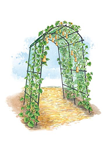 (Extra Tall Titan Squash Tunnel, Lightweight Metal Garden Trellis for Vegetables and)