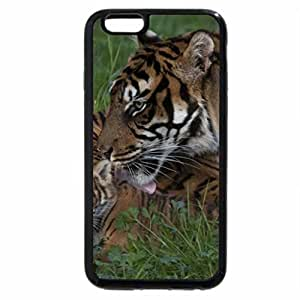 iPhone 6S / iPhone 6 Case (Black) Sumatran tigers