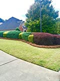 USA Premium Pine Straw - Pine Needle Mulch - Covers 65-80 Sqft
