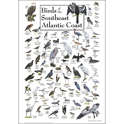 Earth Sky & Water Poster - Birds of the Southeast Atlantic Coast