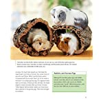 Guinea Pigs (Complete Pet Owner's Manual) 8