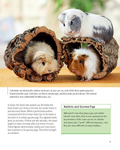 Guinea Pigs (Complete Pet Owner's Manual) 4