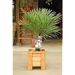 Amazon De Gartenpflanzen Balkonpflanzen