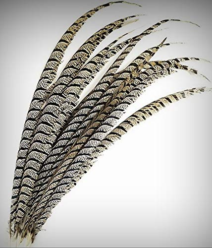 1 Packet of 1 Piece Lady Amherst Center Pheasant Crafting Feathers 30-40