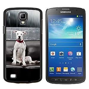 YiPhone /// Prima de resorte delgada de la cubierta del caso de Shell Armor - Raza del perro de Terrier blanco de American Pit Bull - Samsung Galaxy S4 Active i9295