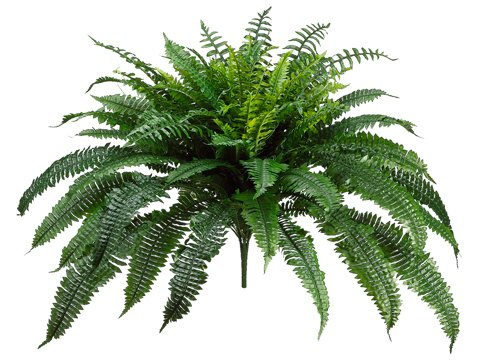 Silk Plants Direct Boston Fern Bush (Pack of 2) by Silk Plants Direct
