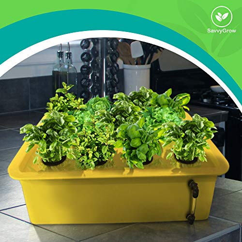 Herb Garden Starter Kit Indoor - Hydroponics Growing System with Nutrients and Herbs Seeds - Heirloom Non-GMO Cilantro, Parsley, Basil, Thyme, Mint - Complete All in One Ready to Grow (Herb Kit) by SavvyGrow (Image #2)