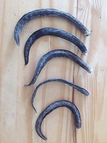 5 Real Muskrat Tails cured Witchcraft Voodoo Spell Skull taxidermy mount repair Craft by TruBlu Supply