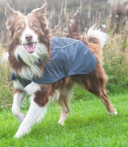 RUFFWEAR ARIA DOG PET RAIN JACKET FULL COVERAGE WATERPROOF BREATHABLE ALL SIZES & COLORS (Medium, Twilight Gray) by Ruffwear