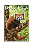Point Defiance Zoo and Aquarium - Red Panda (24x36 Framed Gallery Wrapped Stretched Canvas) offers