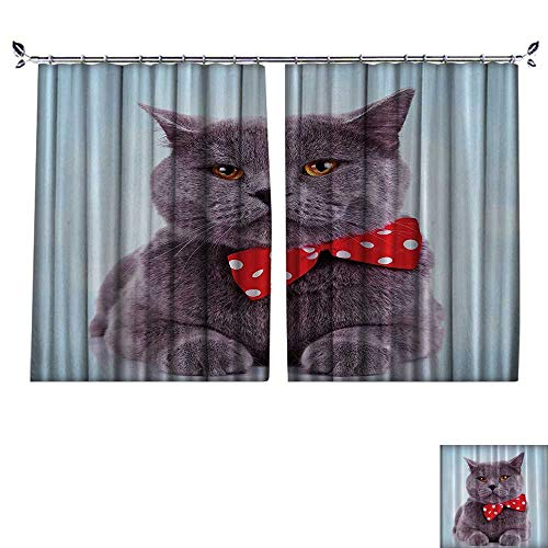 DESPKON Curtain Outer Curtain Tuxedo Gray Scottish Fold Theme with Red White ka Dots Tie Bow Baby Blue Fun Home Suitable for Living Room. W63 x L63